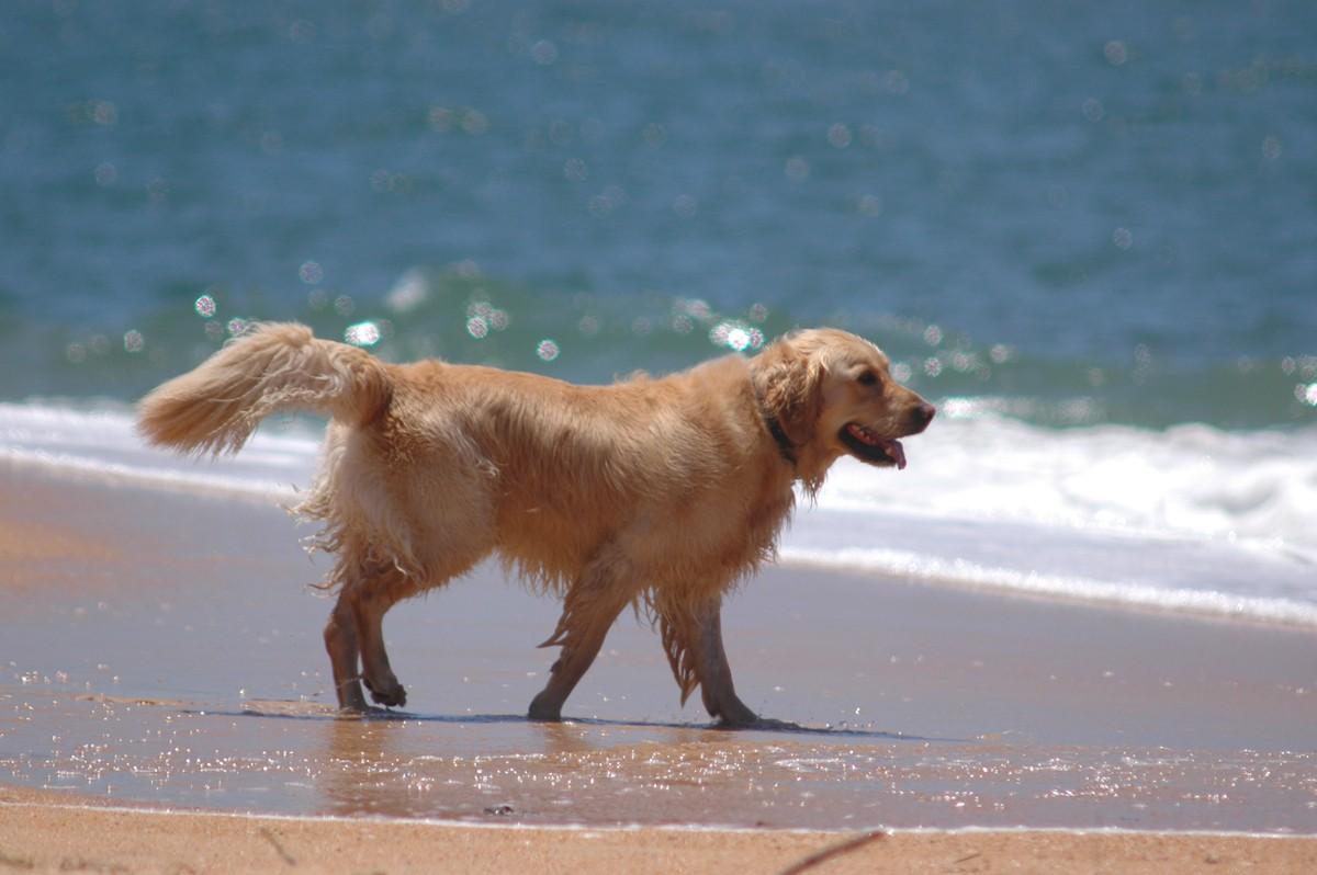 Wakacje z psem – jakie miejsce będzie odpowiednie?